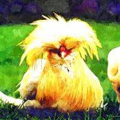 Mina, la chiassosa gallina